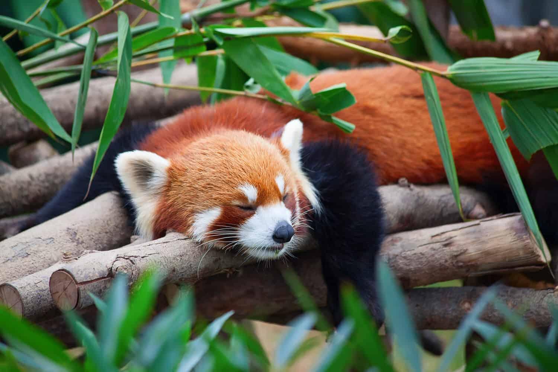 Den Firefox zur Rakete machen mit Fasterfox!