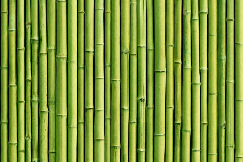 Bambus im eigenen Garten anbauen