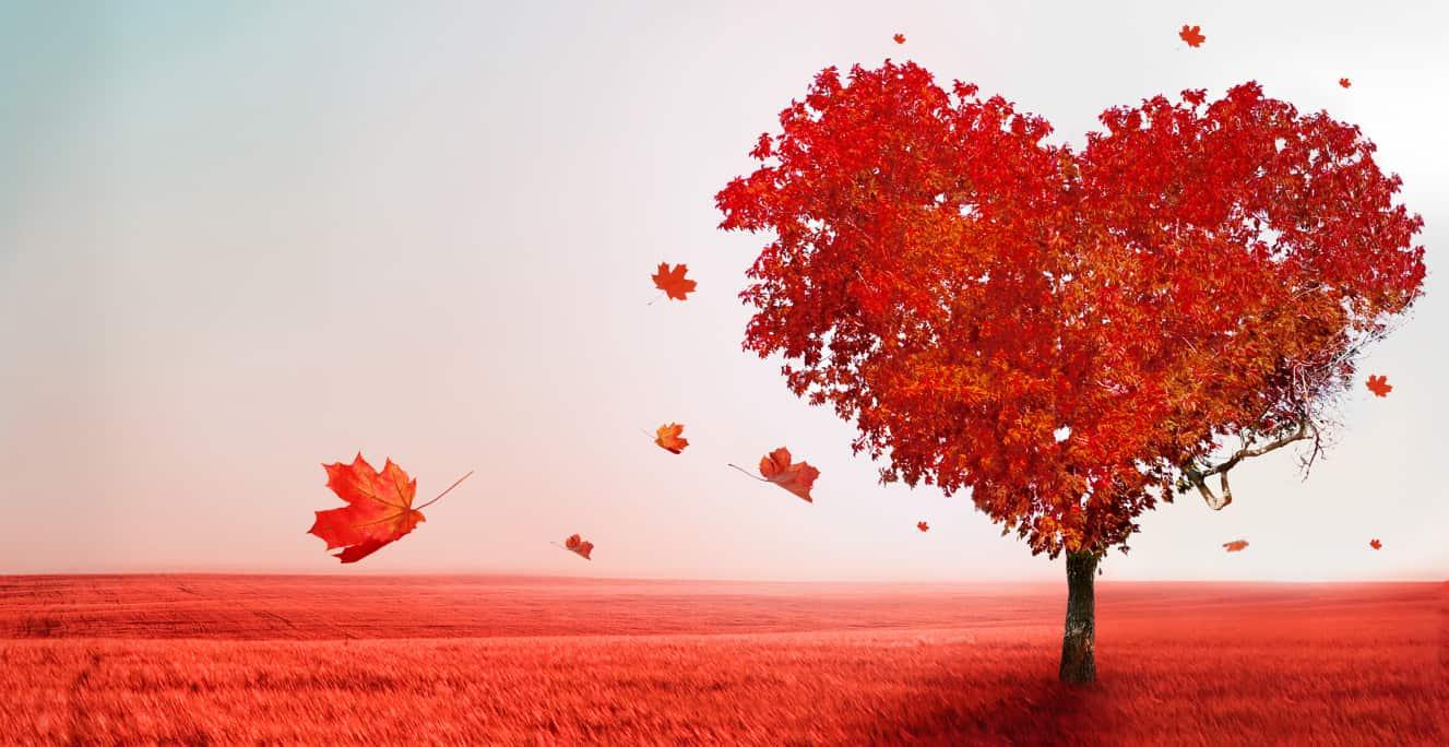 Liebessprüche und Gedichte zur Liebe