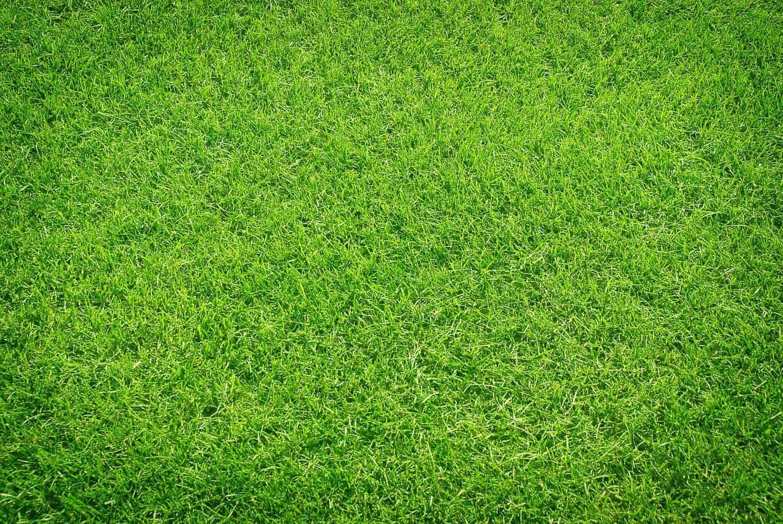 Der perfekte Rasen