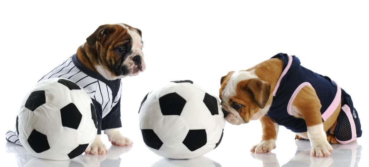 Fußballwitze