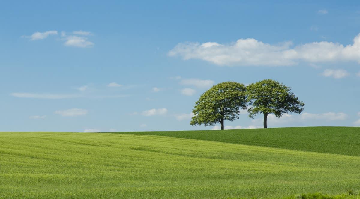 Ab wie vielen Bäumen spricht man von einem Wald?