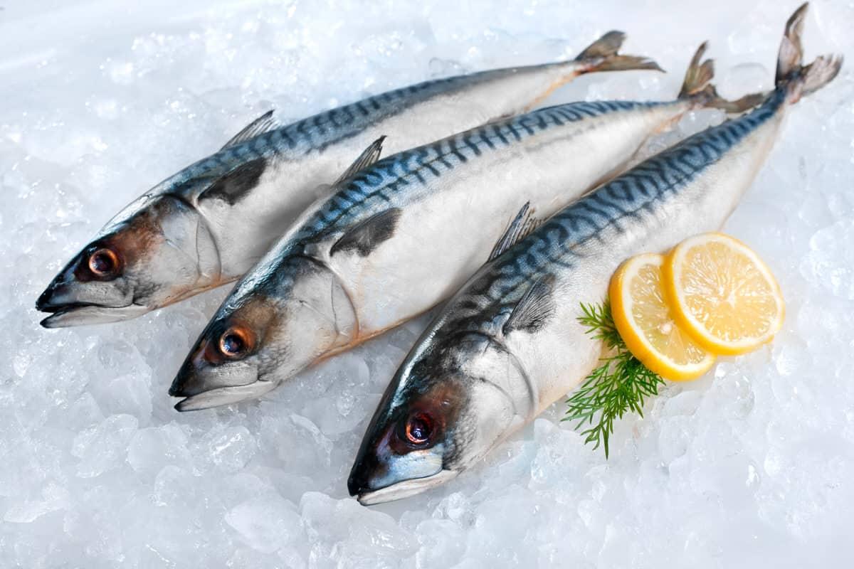 Warum bekommt Frischfisch keinen Gefrierbrand?