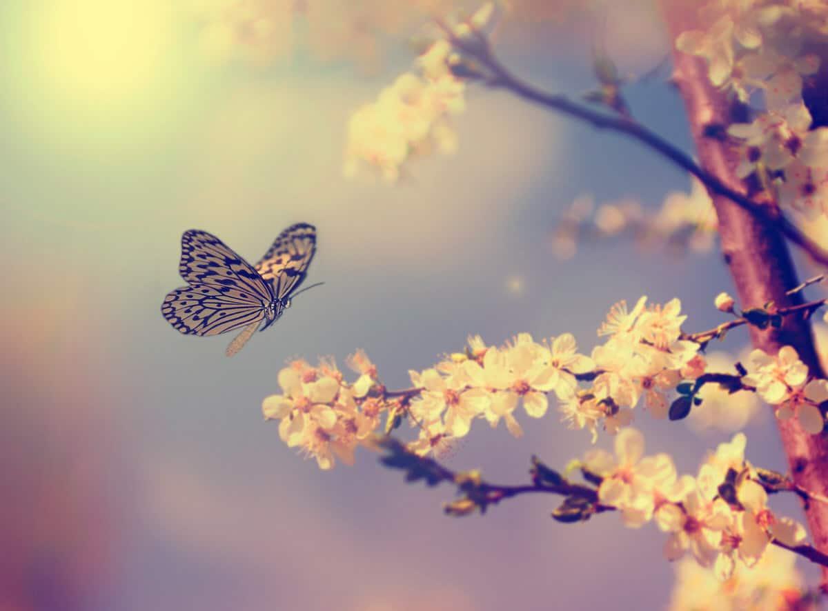 Warum fliegen Schmetterlinge im Zickzack?