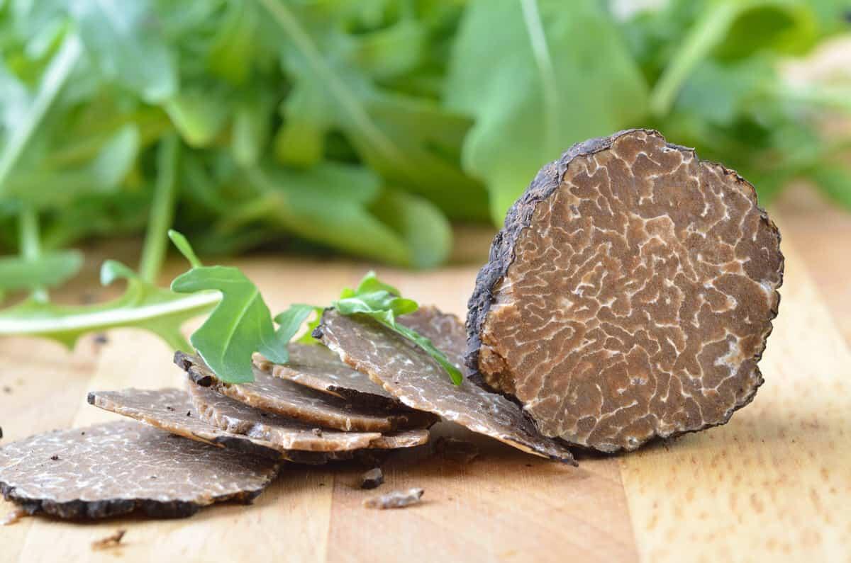 Warum kultiviert man Champignons, Trüffelpilze aber nicht?