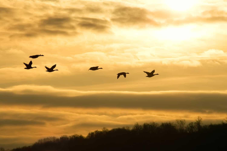 Warum bleiben Zugvögel nicht im Süden?