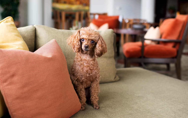 polsterm bel als zentrum der entspannung und gem tlichkeit hilfe im netz. Black Bedroom Furniture Sets. Home Design Ideas