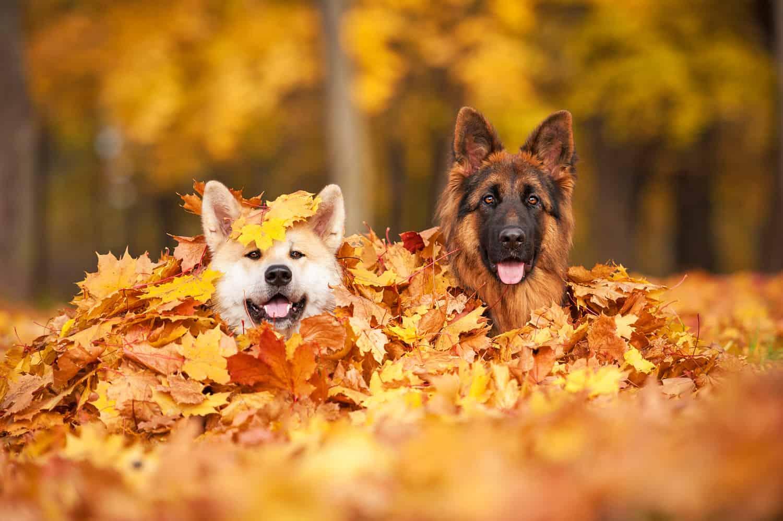 Versicherung für ihren Hund, den besten Freund des Menschen